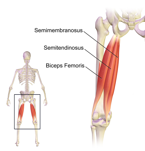 Hamstring Injury Your Questions Answered Rugbystore Blog