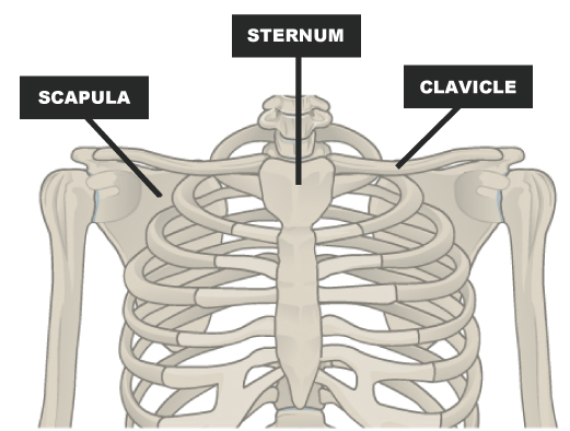 Broken Collarbone Human Anatomy