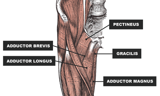 Groin Injury: Comprehensive Recovery Guide | rugbystore Blog